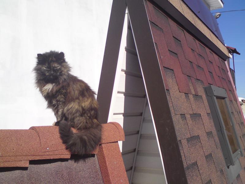 Кошка Мурка на крыше